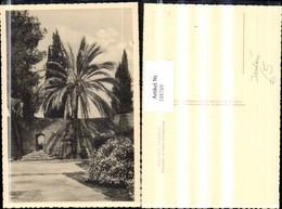 188769,Israel Jerusalem Umgebung Klosterhof In Maria Heimsuchung Ansicht Palme - Israel
