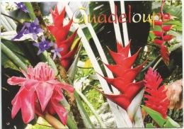 Guadeloupe : La Forêt Tropicale (ed Exbrayat) Flore - Basse Terre