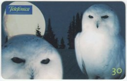 BRASIL C-654 Magnetic Telefonica - Animal, Bird, Owl - Used - Brésil