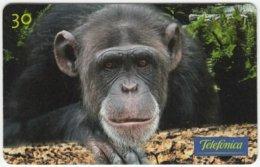 BRASIL C-658 Magnetic Telefonica - Animal, Monkey - Used - Brésil