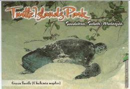 Turtle Islands National Park (Malaysia), Tortue Verte Pondant Ses Oeufs, Carte Postale Adressée ANDORRA - Turtles