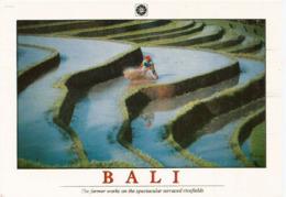 BALI: Farmer Works On The Spectacular Terraced Rice Fields In Bali,  Carte Postale Neuve Non Circulée - Indonesia