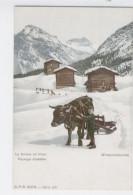 SUISSE En Hiver - Paysage Alpestre - Winterlandschaft  Avec Boeuf En Attelage /1713 A - Zonder Classificatie