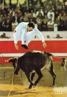 40 - Corrida - Tauromachie - Courses De Vaches Landaises - Saut à Pieds Joints Par Lesfaurie - France