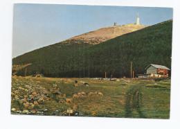 CPSM 84 - MONT-VENTOUX - MONT-SEREIN - Coucher De Soleil Au Mont-Serein TB PLAN CHALET + Troupeau De Moutons - France