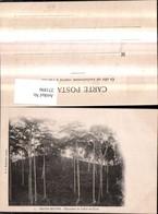 271896,Kongo Magna Matadi Plantation De Cafe Et De Cacao - Ansichtskarten