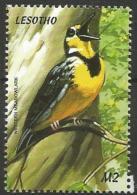 Lesotho - MNH -family ORIOLES And BLACKBIRDS (236) - Western Meadowlark ( Sturnella Neglecta ) - Sperlingsvögel & Singvögel