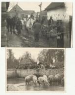 Croatia - Topolovac ( Sisak ) 1953 , Horse , Pigs , Exelent 2 X Reall Foto - Kroatien