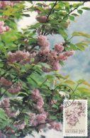 TREES, CHERRY BLOSSOM, CM, MAXICARD, CARTES MAXIMUM, 1991, CHINA - Bäume