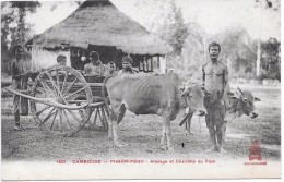 CAMBODGE - Phnom Penh - Attelage Et Charrette Du Pays