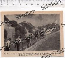 Alpinismo Sport Montagna Ortles Alpi Retiche  - Immagine Ritagliata Da Pubblicazione Originale D´epoca - Immagine Tagliata
