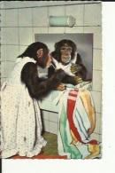 Hendaye  64   Carte De Singe Se Lavant Les Dents Apres La Toilette - Hendaye