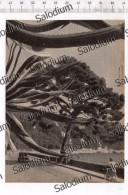 PORTOFINO - Immagine Ritagliata Da Pubblicazione Originale D´epoca - Immagine Tagliata