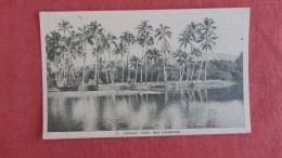 Coconut Trees     New Caledonia -------ref  2277 - New Caledonia