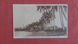 Coconut Trees Frienge The Shores    New Caledonia -------ref  2277 - New Caledonia