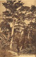 Arbres Exotiques - In The Forest (Côte D'Ivoire) S.C.O.A. - Edition Lévy Et Neurdein - Carte N°302 - Arbres