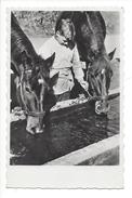 15030 - Chevaux à La Fontaine Avec Jeune Homme Journée Mondiale De Bonté Envers Les Animaux - Cartes Postales