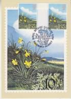 Great Britzin 1979 British Flowers / Daffodils 10p Gutter On Maxicard (wrinkle In Corner) (31217) - Maximumkaarten