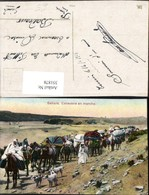 351878,Sahara Caravane En Marche Karawane Volkstypen Kamele Hunde - Ansichtskarten