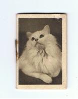 Petit Calendrier 1941 (+/- 3,5 X 5,5 Cm) Chat (Fr38) - Calendriers