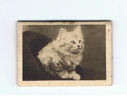 Petit Calendrier 1941 (+/- 3,5 X 5,5 Cm) Chaton (Fr38) - Calendriers