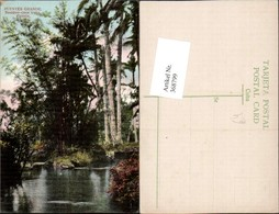 368799,Kuba Cuba Havana Puentes Grande Bamboo-cane Trees Paisaje Bambus - Ansichtskarten