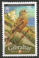 Gibraltar MNH - Family BUNTINGS And NEW WORLD SPARROWS - Ortolan Bunting ( Emberiza Hortulana ) - Vogels
