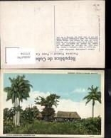 375154,Cuba Habana Havana Paisaje Cubano Country-Hut Hütte Palme - Ansichtskarten