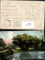 399011,Ceylon Sri Lanka Kandy Peradeniya Gardens Garten - Sri Lanka (Ceylon)