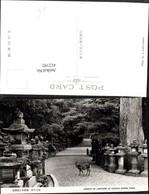 412192,Japan Nara Kasuga Shrine Avenue Of Lanterns Laternen Reh - Ohne Zuordnung