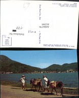 412305,Haiti Harbor Of The City Of Cap-Haitien Volkstypen Eseln - Ansichtskarten