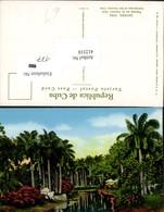 412310,Cuba Havana Landscape At The Country Club Palmen - Ansichtskarten