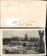 433001,New Zealand Neuseeland Pastoral Scene Schafherde Schafe - Ohne Zuordnung