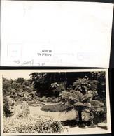 433007,New Zealand Neuseeland New Plymouth Park Garten Palme - Ohne Zuordnung