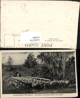 433005,New Zealand Neuseeland Droving Sheep Schafherde Schafe Schäfer Brücke - Ansichtskarten