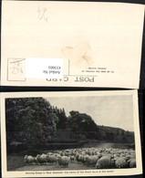 433003,New Zealand Neuseeland Droving Sheep Schafherde Schafe - Ansichtskarten
