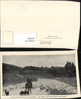 432998,New Zealand Neuseeland Droving Sheep Schafherde Schafe Hirte Schäfer Pferd - Ansichtskarten