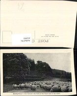 432993,New Zealand Neuseeland Droving Sheep Schafherde Schafe - Ansichtskarten