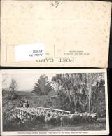 433002,New Zealand Neuseeland Droving Sheep Schafherde Schafe Schäfer Pferde Brücke - Ansichtskarten