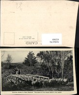 432989,New Zealand Neuseeland Droving Sheep Schafherde Schafe - Ansichtskarten