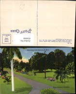 434400,Jamaica Hope Botanical Gardens Garten Park Palmen - Ansichtskarten