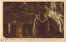 ASIE CAMBODGE ARCHEOLOGIE Ruines D´Angkor TA PROHM Ed NADAL N° 24 Arbre Chevauchant Les Galeries Ouest De La 4ème - Cambodia