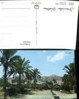 436365,Palästina Jericho Fountain Of Eliseus Quele Palmen - Ansichtskarten