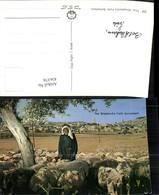 436376,Palästina Bethlehem Shepherds Field Hirte Schäfer Schafe - Ansichtskarten