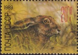 Rabbit - Hare / Animal Fauna - 1989 CCCP - MNH - Konijnen