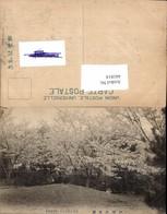 441814,Japan Beppu Sansui-En Park Baumblüte - Japan
