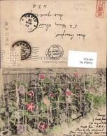 441826,Japan Tokyo Tokio Blumen - Ohne Zuordnung
