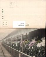 441817,Japan Tokyo Tokio Blumen Pflanzen - Ohne Zuordnung