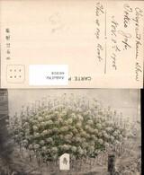 441818,Japan Tokio Tokyo Pflanzen - Ohne Zuordnung