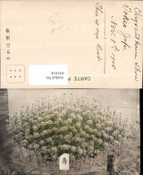 441818,Japan Tokio Tokyo Pflanzen - Japan